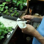 How To Disinfect Plastic Seed Trays And Flats Before Starting Seeds Indoors